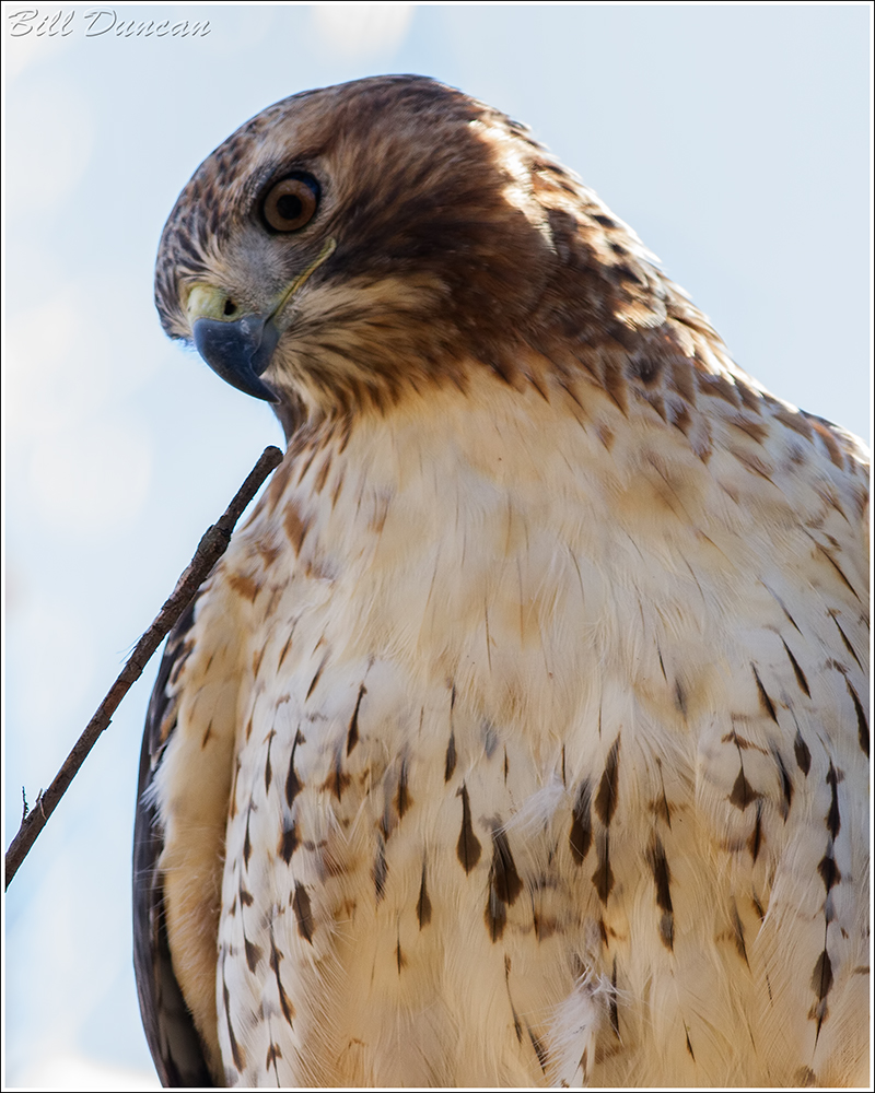 Slide Show Of Some Of My Bird Photos >> Mondays Are For The Birds Red Tailed Hawk A Thousand Acres Of