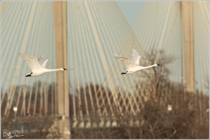The Clark Bridge