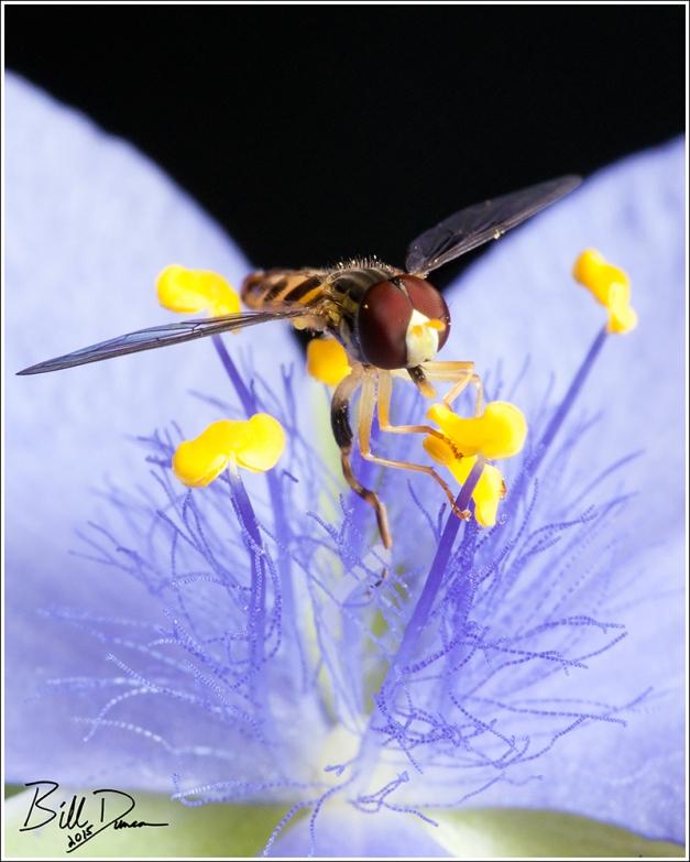 Time Flies Like an Arrow... Hover Flies Like a Flower