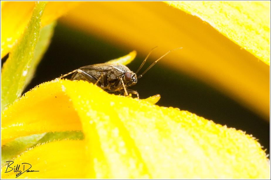 Flower Bugs