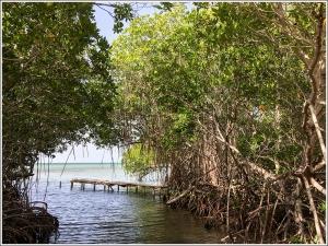 Mangrove Pier