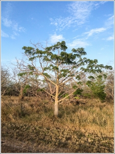 Subtropical Dry Forest
