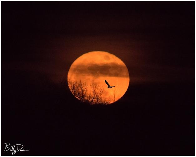 SEOW & Christmas Moon